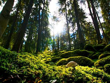 Orörd natur – bara tre procent kvar