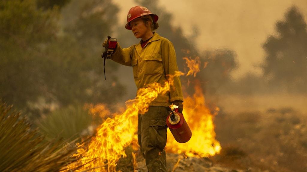 En brandman står bland lågorna i Monrovia, Kalifornien. Okontrollerade skogsbränder rasar nu över stora delar av USA:s västkust.