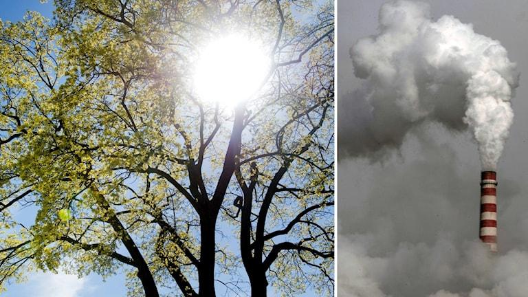 Sol genom ett träd och utsläpp.