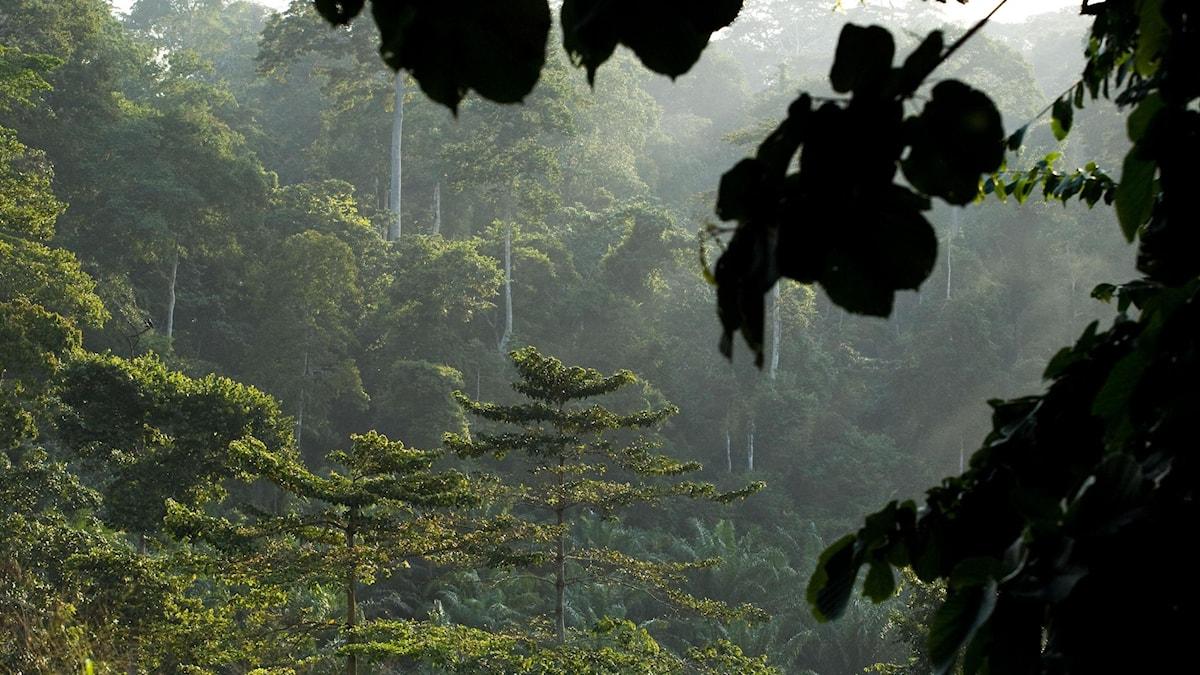 Tropisk regnskog.