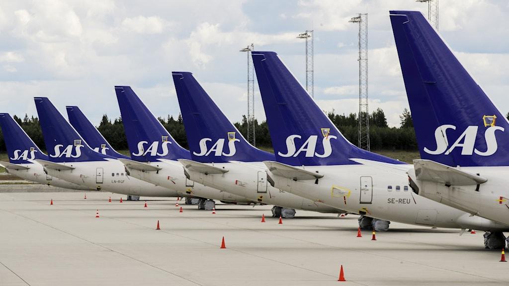 SAS flygplan parkerade på en lång rad.