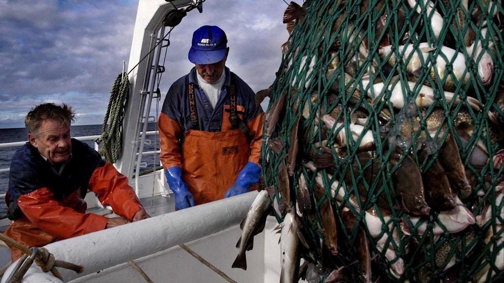 Två fiskare fiskar torsk i Östersjön.