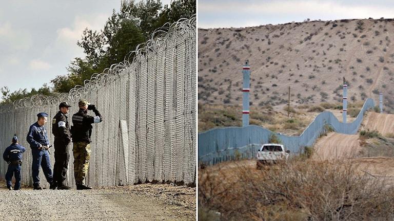 Delad bild: Stängsel mellan Ungern och Serbien och mellan USA och Mexiko.
