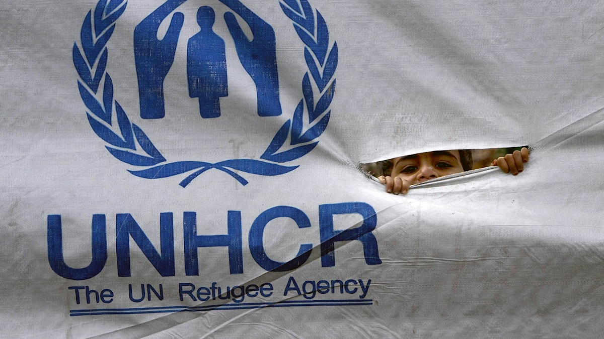 FN:s flyktingorgan UNHCR