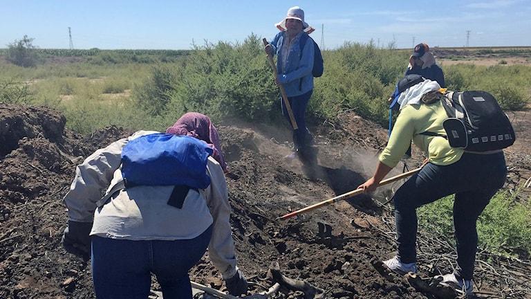 Mexikanska mammor gräver efter försvunna barn.