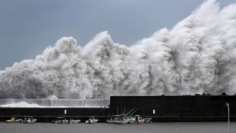 Höga vågor när tyfonen Jedi drog in över Japan 4 september.