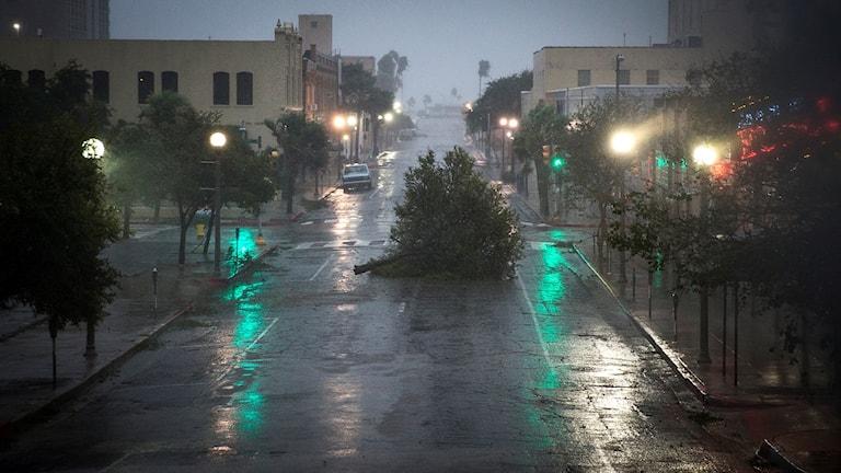 Orkanen Harvey härjar i Corpus Christi, Texas. Foto: TT.
