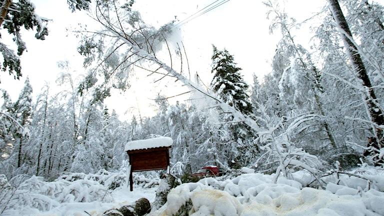 Snö på ledningar