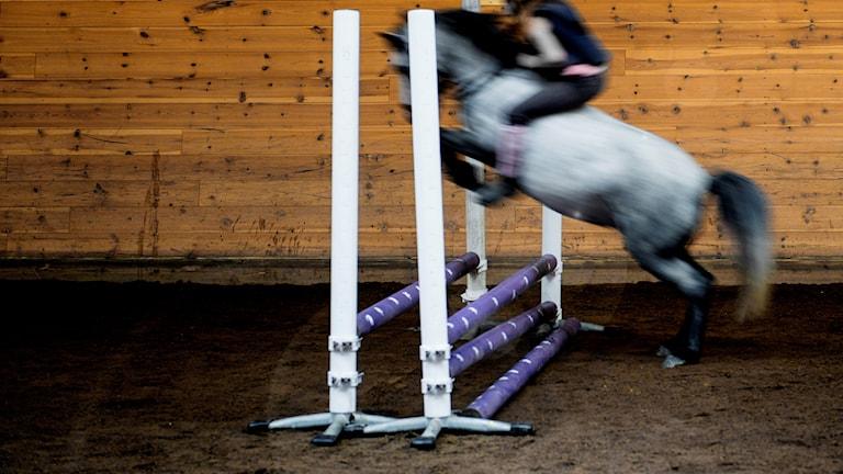 Häst med ryttare hoppar över lågt hinder