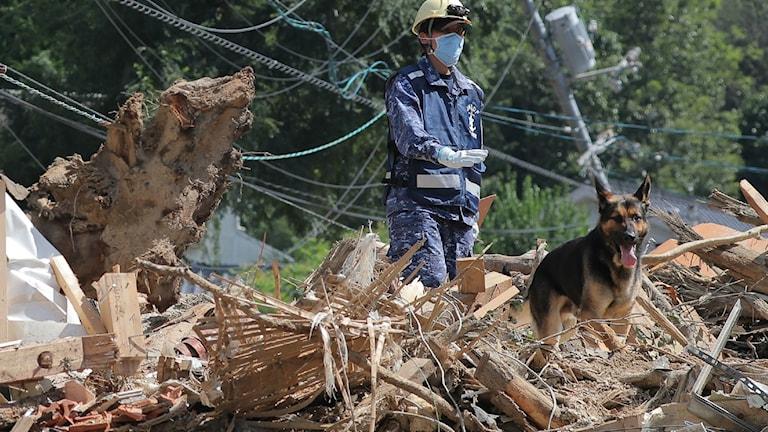 Vakt söker efter försvunna personer tillsammans med hund.