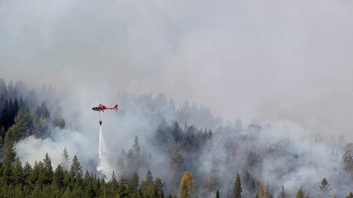 Forest fires were widespread in the intense heatwave.