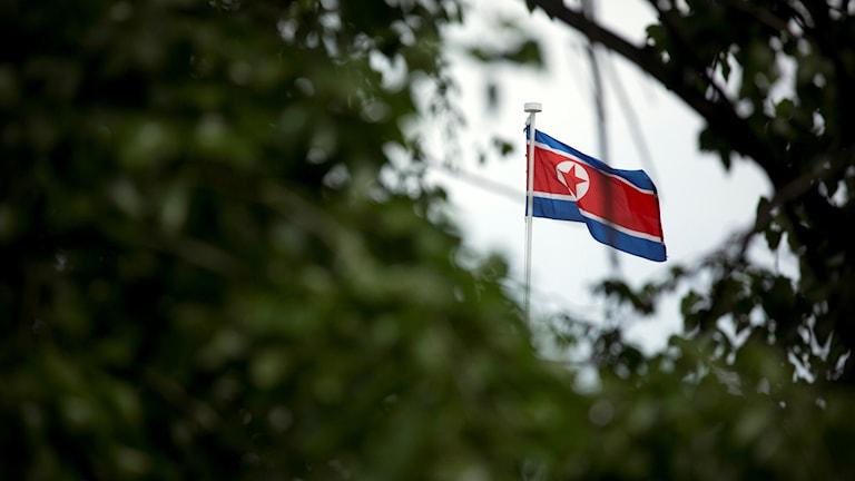 Buskage i förgrunden och Nordkoreas flagga i bakgrunden
