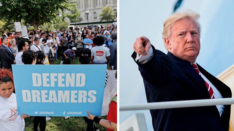 Demonstranter och Trump (arkivbild).  Foto: Pablo Martinez Monsivais/TT och Brendan Smialowski/TT.