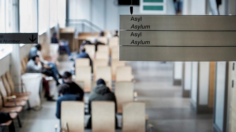 Migrationsverkets väntsal.