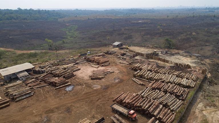 Skogsavverkning i Porto Velho, Brasilien, 2019.