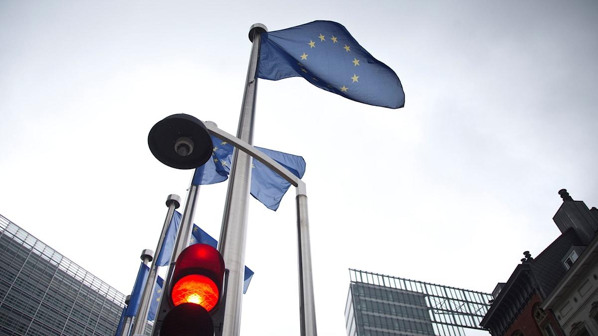 Bryssel EU flagga asyl