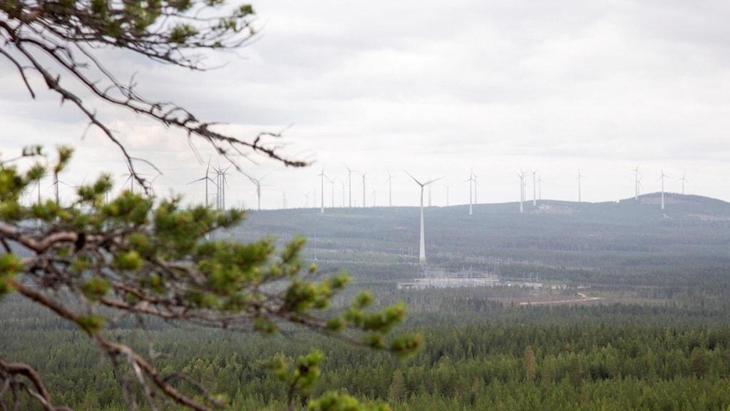 Vindkraftverk ses från berget Kalahatten i Piteå kommun.