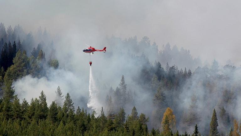 Helikoptrar vattenbombar en skogsbrand utanför Hammarstrand i Jämtland i somras. Foto: Mats Andersson/TT