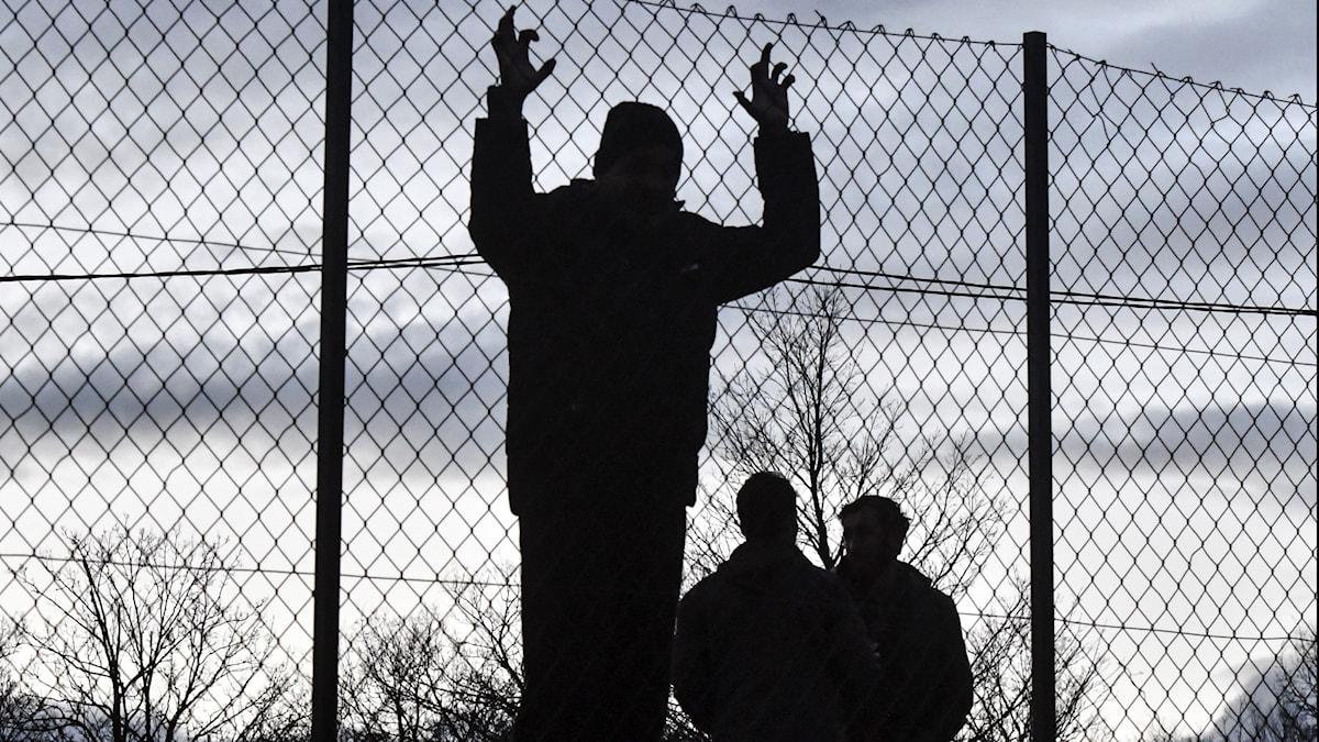 Migranter håller i stängsel
