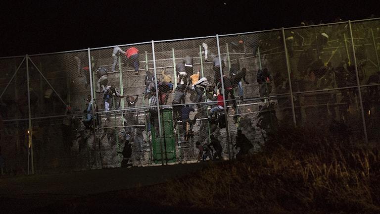 Migranter tar sig över stängsel.