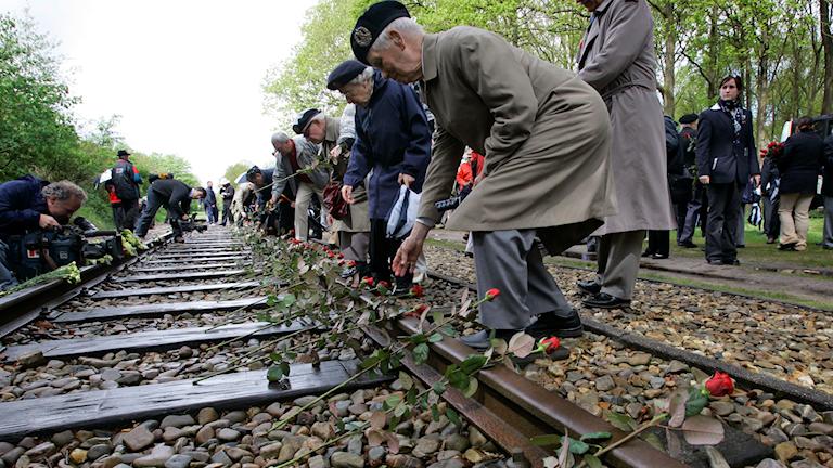 Kanadensiska veteraner lägger ner rosor på järnvägen vid Westerbork, ett av förintelsens läger. Westerbork är ett av lägren dit NS transporterade judar och romer under förintelsen.