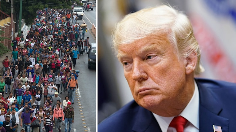 Migranter från Honduras på väg mot USA; Donald Trump. Foto: TT. Montage: Sveriges Radio.