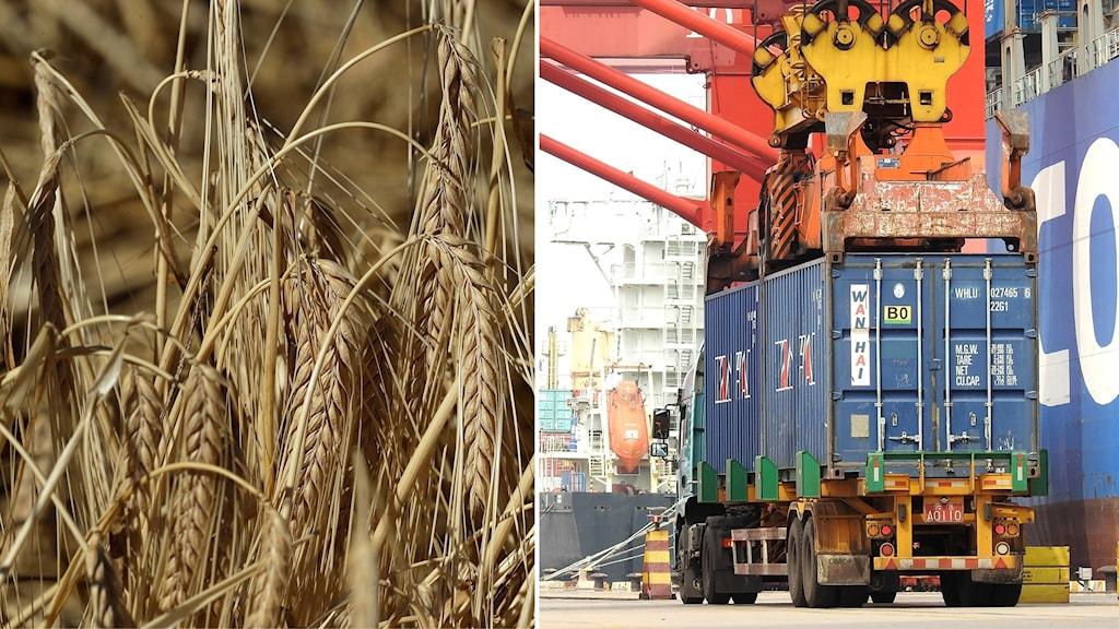 Montage på korn och container som lastas av en båt i en kinesisk hamn.