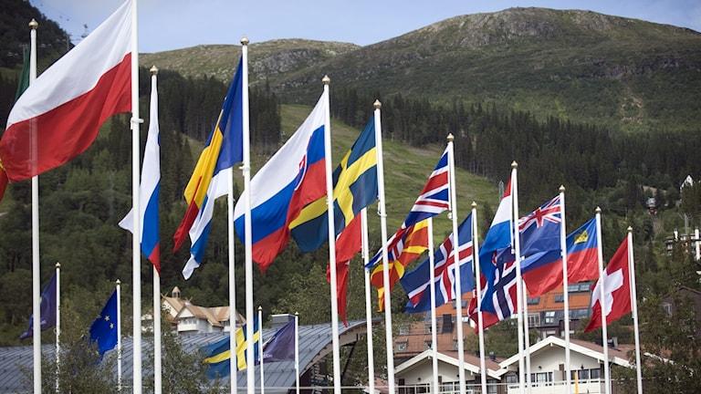 EU-flaggor (arkivbild). Foto: Fredrik Sandberg/TT.