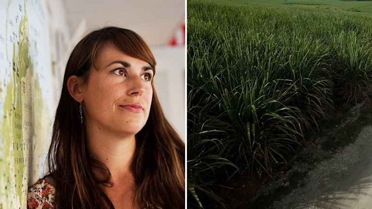 Malena Wåhlin och sockerrör