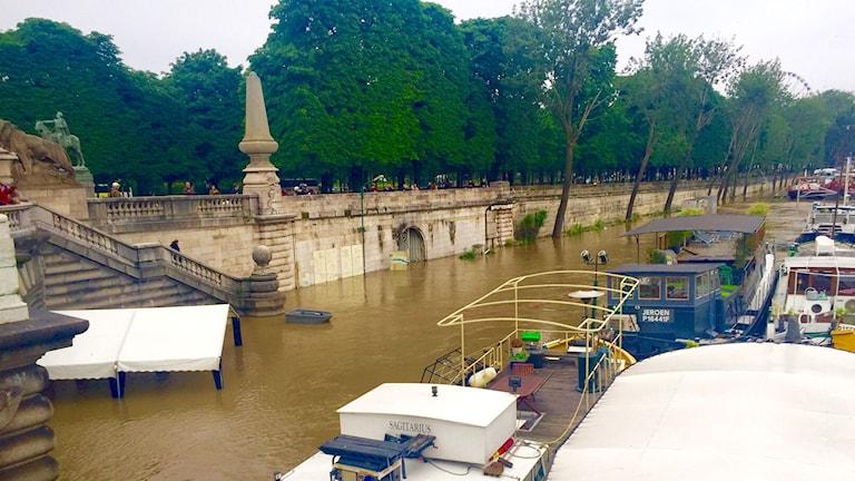 Översvämmad flod.