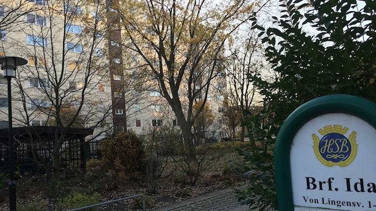 Bilden visar ett av höghusen i bostadsrättsföreningen Ida i Malmö. I förgrunden träd med höstlöv. Foto: Anna Bubenko/Sveriges Radio.