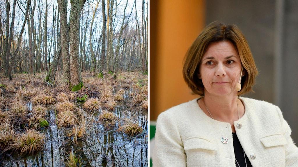 Våtmarker på bilden till vänster, miljö- och klimatminister Isabella Lövin till höger.