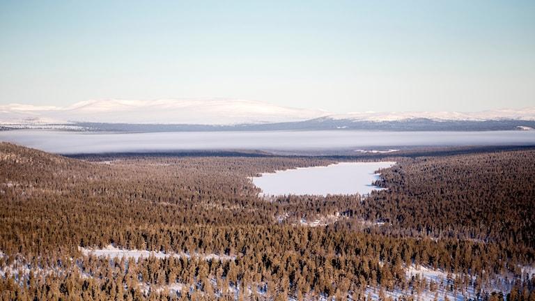 Skog vid Idre fjäll
