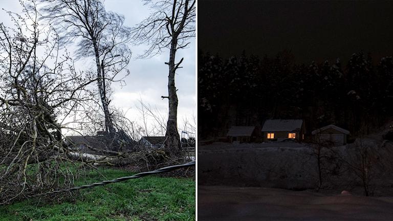 Träd över ledningar och hus i mörker