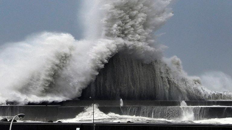 Den kraftfulla orkanen skapade stora vågor vid hamnen i japanska Aki.
