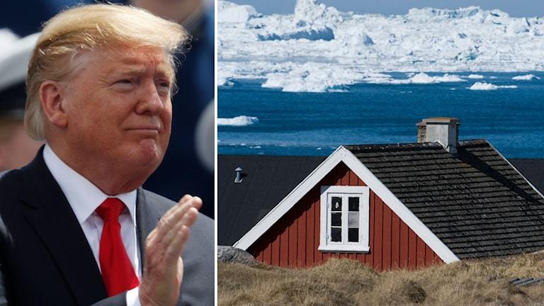President Donald Trump och hus i den nordgrönländska staden Ilulissat där det bor 5000 människor och cirka 4000 slädhundar.