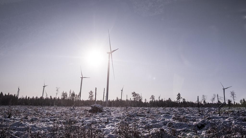 vindkraftverk i piteå