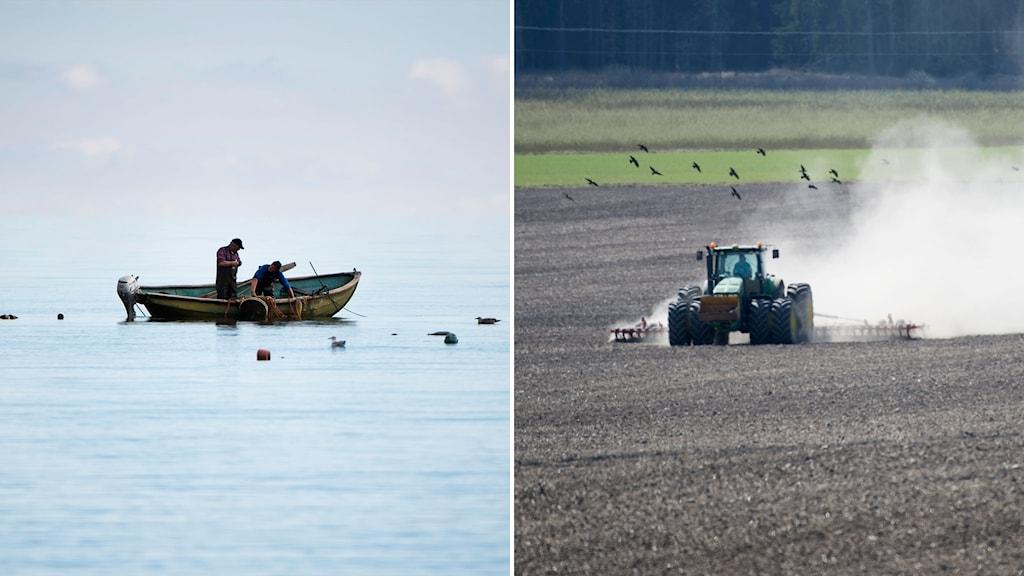 Fiskare i Östersjön och traktor som plöjer åker.