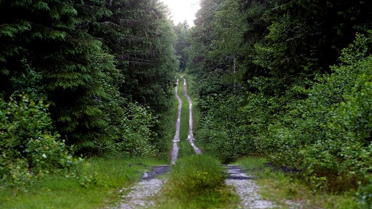 skogsväg med grässträng i mitten