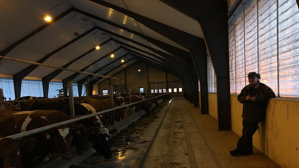 Mjölkbonden Thomas Bäck säger att de skulle klara att leverera mjölk i en vecka utan el.