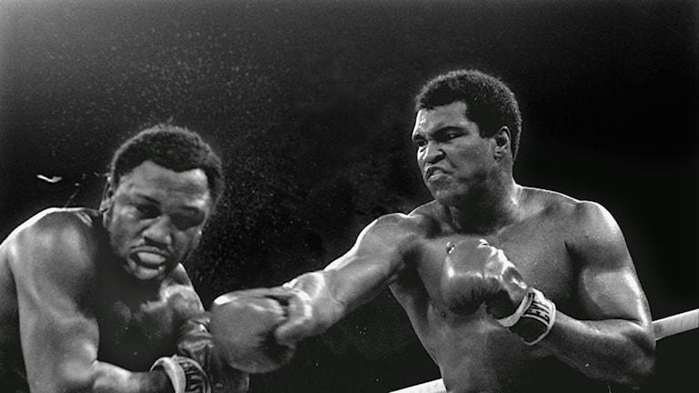 Ali mot Fraizer 1975. Nionde ronden. Ali vann.