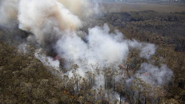 De stora bränderna som drabbar östra Australien har det senaste dygnet fortsatt att sprida sig.