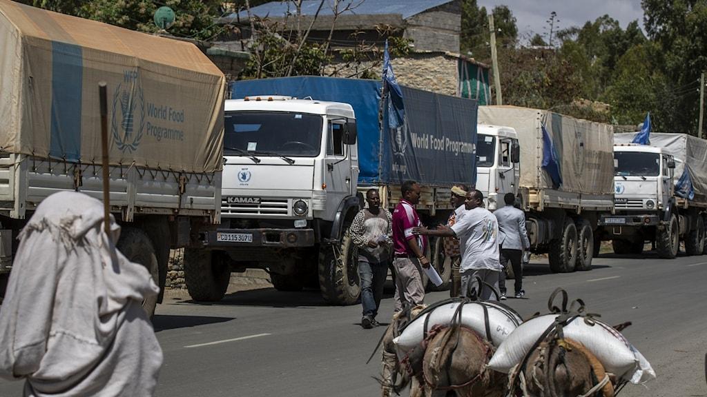 En karavan av bilar och ett par åsnor.