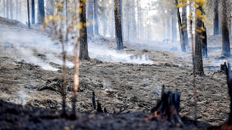 Rök från marken i skog