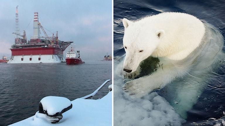 Oljeplattform isbjörn arktis svalbard