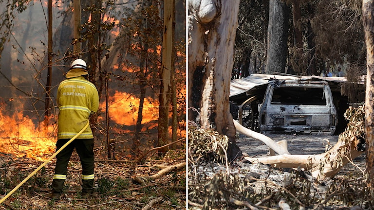 En brandman i Australien som sprutar vatten mot en skogsbrand och en bild på en utbrunnen bil där bränderna har dragit fram.