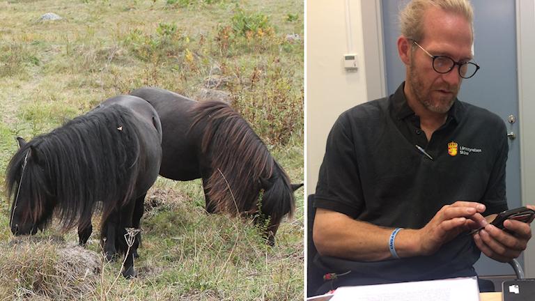Mattias Gårdlund är djurskyddsinspektör på länsstyrelsen i Skåne.