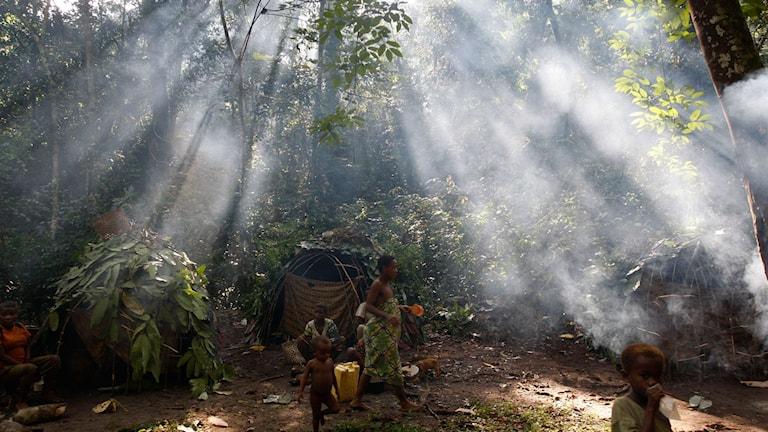 Okapi Nationalpark i Kongo-Kinshasa