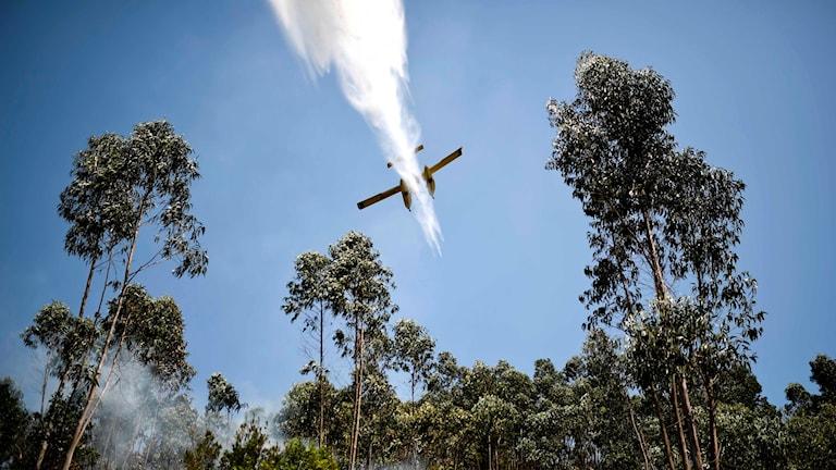 Räddningsplan vattenbombar i Portugal.