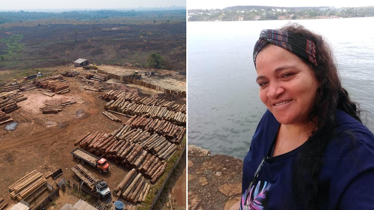 Skogsavverkning i Amazonas, Brasilien (arkivfoto) och Osvalinda Alves, Edelstampristagare från Brasilien